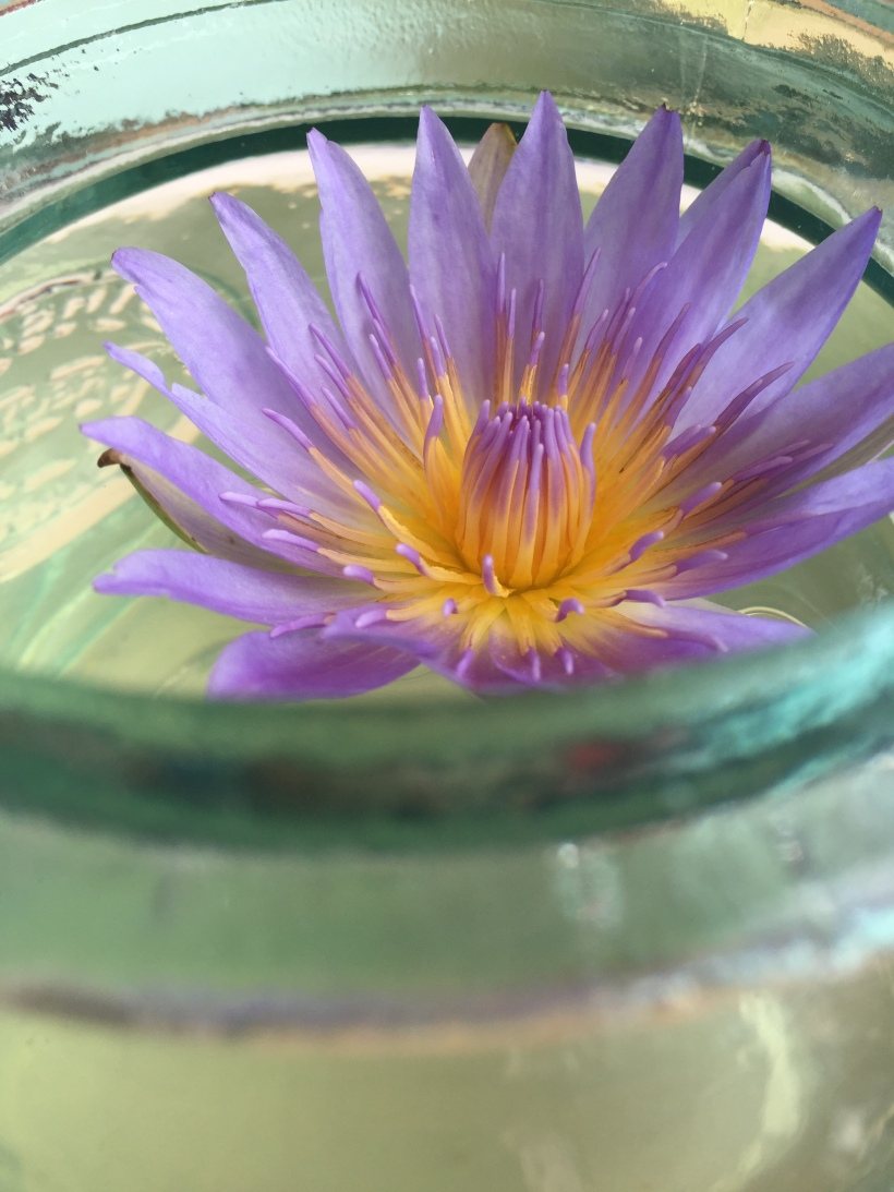 blue lotus 2