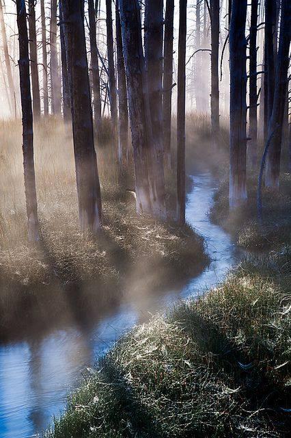 stream of flow.jpg