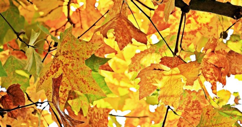 autumn-1655915_1280.jpg