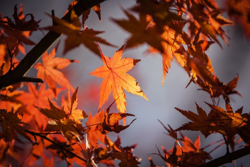 autumn-leave-1415541_1280.jpg