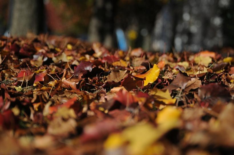 leaves-101329_1280.jpg
