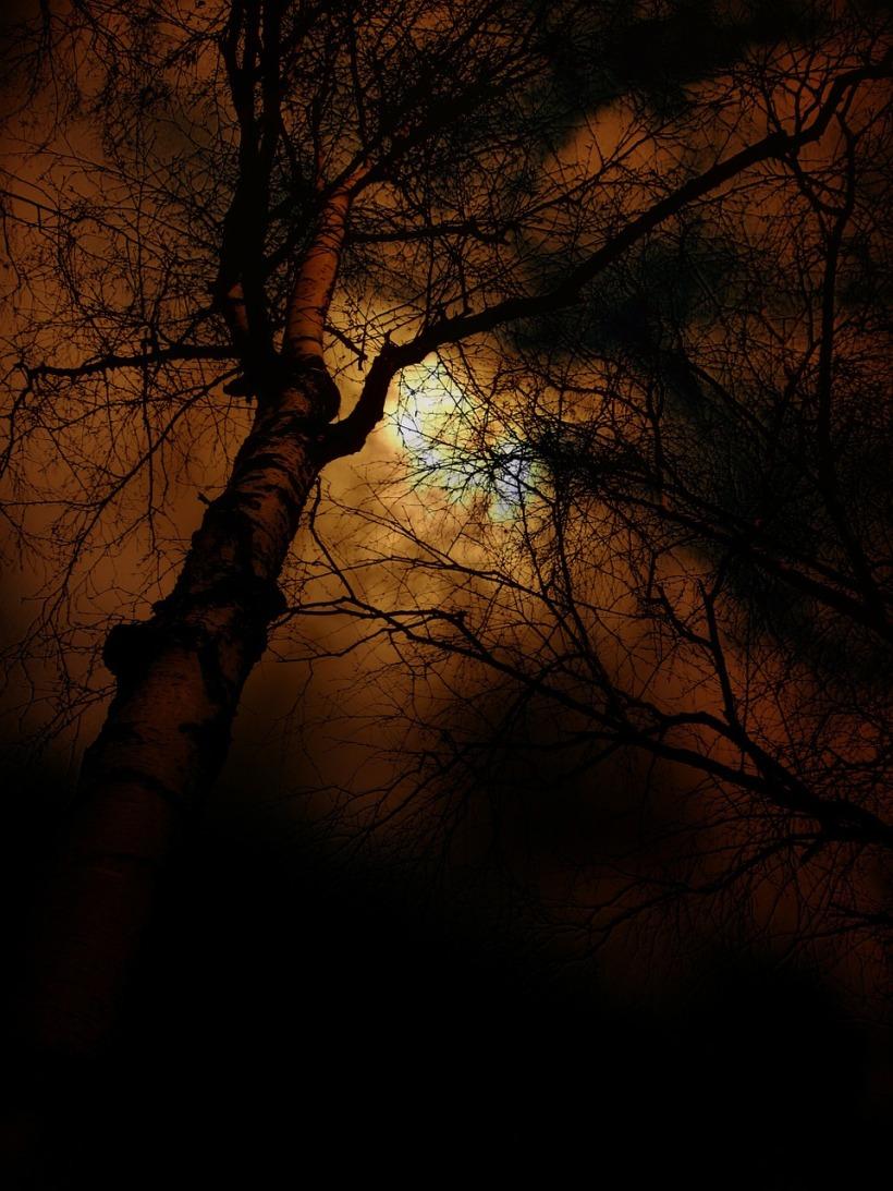 tree-83550_1280.jpg